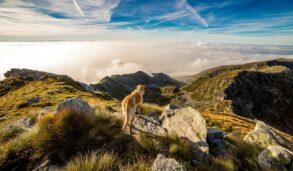 동물과 관련된 영어 관용구 알아보기! Top dog는 무엇일까?