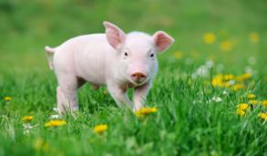 생활영어, '돼지 저금통' 영어로 어떻게 말할까?