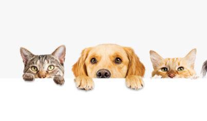 【主題單字】養寵物必備:毛小孩英文懶人包