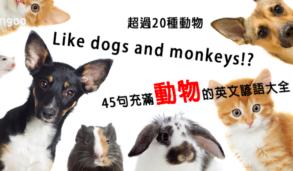 【主題單字】Like dogs and monkeys!? 超過20種動物!45句充滿動物的英文諺語大全