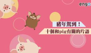 【英文片語】豬年駕到!pig out pig-headed sweat like a pig 十個和pig有關的片語!