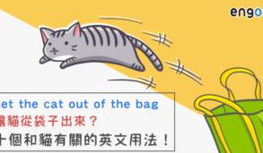 【英文片語】Let the cat out of the bag讓貓從袋子出來?教你破解十個和貓有關的英文用法!
