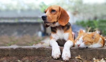 【主題單字】貓咪嚎叫、呼嚕聲、小狗低吼等動物叫聲英文,精準使用動詞描述動物更傳神!【貓狗篇】