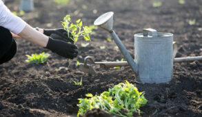 【主題單字】喜歡種花草的你不要錯過!這些園藝用詞的英文Engoo告訴你!