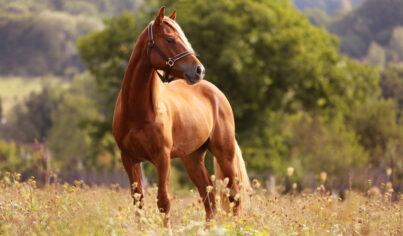【主題單字】馬都死了為什麼還要打?12個和馬有關的英文俗諺