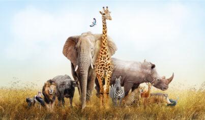 【基礎英文】不同動物所搭配的英文量詞也不同,看完這篇一次搞懂!